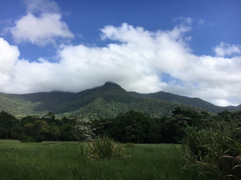 Daintree Rainforest Observatory